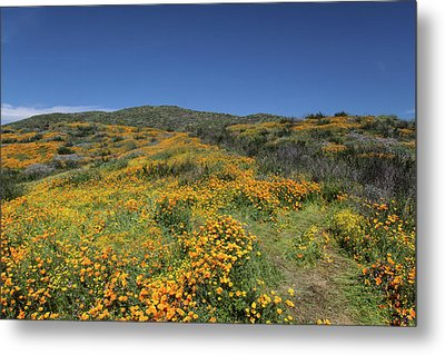 Metal Print featuring the photograph Colors Of Springtime by Cliff Wassmann