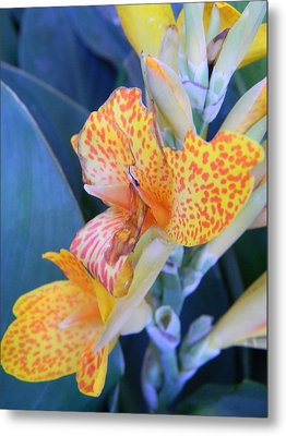 Colors Of The Canna Lily Metal Print by Warren Thompson