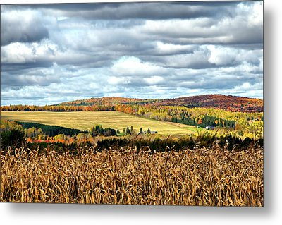 Colors Of The Field Metal Print by Gary Smith