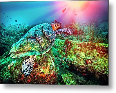 Metal Print featuring the photograph Colors Of The Sea In Lights by Debra and Dave Vanderlaan