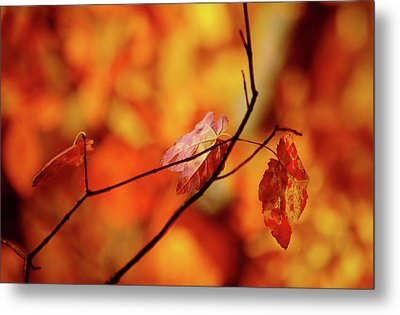 Metal Print featuring the photograph Colors by Robert Geary