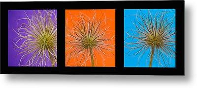 Colourful Crocus Triptych Metal Print by Lisa Knechtel