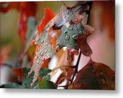Colours Of Fall I Metal Print