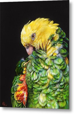 Metal Print featuring the drawing Colours Of The Jungle - Yellow-headed Amazon by Elena Kolotusha