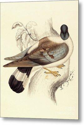 Columba Leuconota, Snow Pigeon Metal Print by Elizabeth Gould