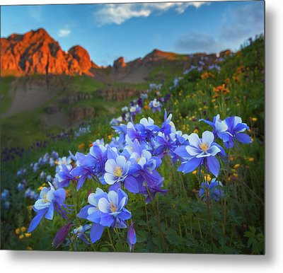 Metal Print featuring the photograph Columbine Sunrise by Darren White