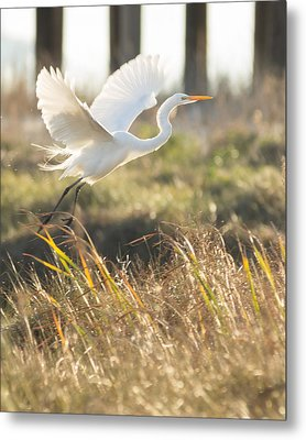 Metal Print featuring the photograph Come Fly With Me by Julie Andel