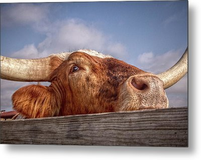 Come Play With Me Metal Print by Linda Unger