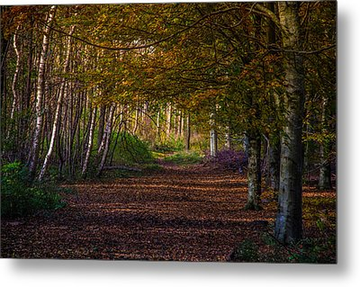 Metal Print featuring the photograph Comfort In These Woods by Odd Jeppesen