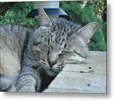 Comfortable Metal Print by DB Artist