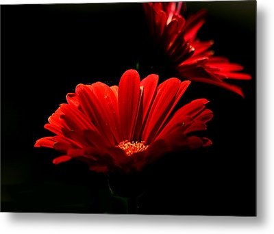 Coming In To The Light Metal Print by Sheila Brown