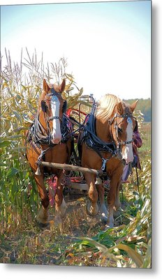 Coming Through The Corn Metal Print by Valerie Kirkwood