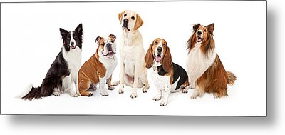 Common Family Dog Breeds Group Metal Print by Susan Schmitz