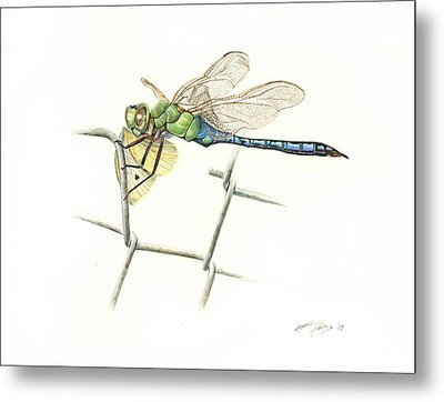 Common Green Darner Metal Print by Logan Parsons