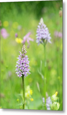 Common Spotted Orchid Metal Print by Tim Gainey