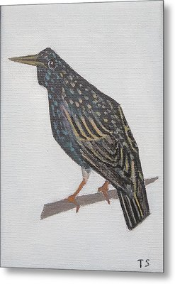 Common Starling Metal Print by Tamara Savchenko