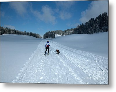 Competitor In The Belgium Sleigh Dog Championships Metal Print by Neil Harrison