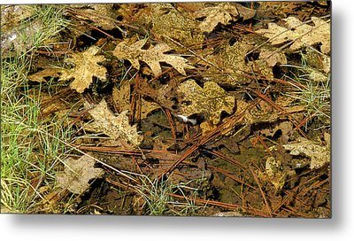 Composition In Brown And Green With Butterfly Metal Print by Larry Darnell