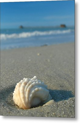 Conch Shell Metal Print by Juergen Roth