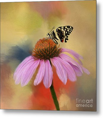 Coneflower And Butterfly Metal Print by Kathleen Rinker