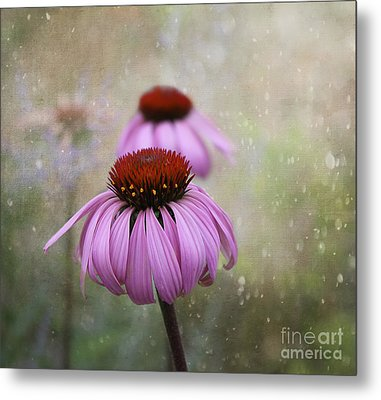 Coneflower Dream Metal Print