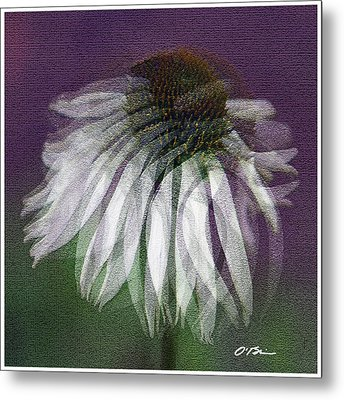 Coneflower's Memories Metal Print