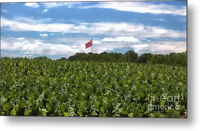 Confederate Flag In Tobacco Field Metal Print