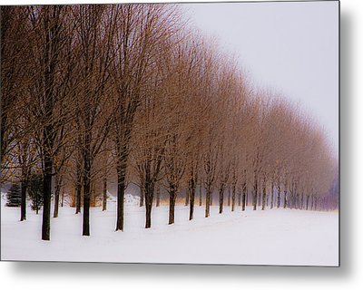 Metal Print featuring the photograph Connolly Trees by Don Nieman