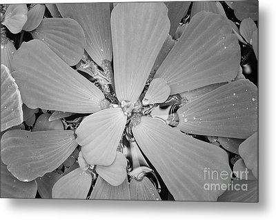 Conservatory Nature In Black And White 1 Metal Print by Carol Groenen