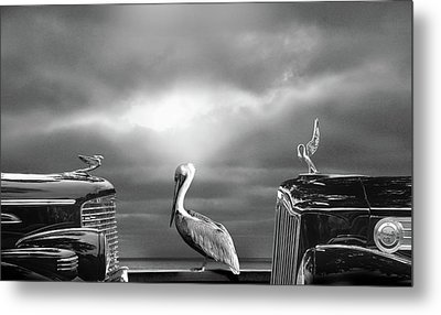 Contemplating The Pelican Metal Print by Larry Butterworth