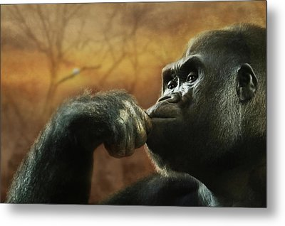 Metal Print featuring the photograph Contemplation by Lori Deiter