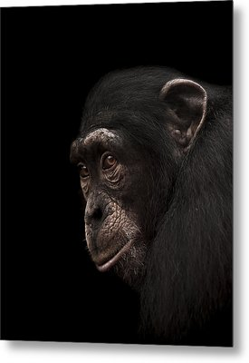 Contemplation Metal Print by Paul Neville