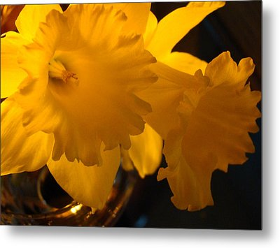 Contemporary Flower Artwork 10 Daffodil Flowers Evening Glow Metal Print by Baslee Troutman