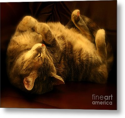 Contentment Metal Print