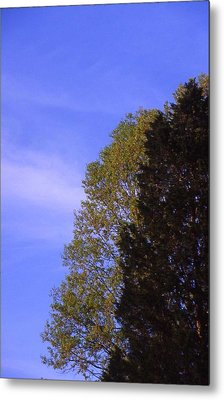 Contrasting Trees Against Sky Metal Print by Randy Muir