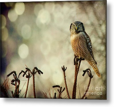 Convenient Perch Metal Print by Heather King