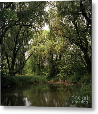 Cook County Forest Preserve No 6 Metal Print by Kathy McClure