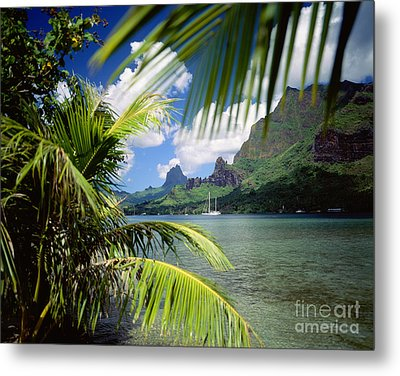Cooks Bay With Sailboat Metal Print by Ron Dahlquist - Printscapes