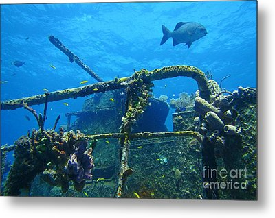 Coral And Fish On A Caribbean Shipwreck Metal Print