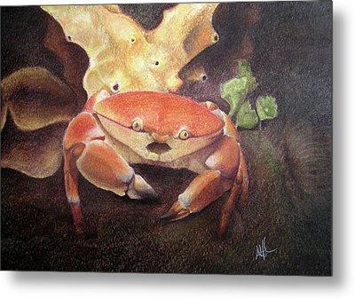 Coral Crab Metal Print
