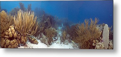 Coral Reef Metal Print by Peter Scoones