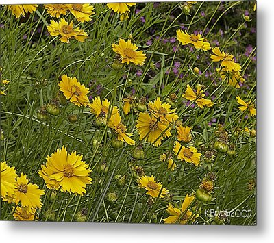 Metal Print featuring the photograph Coreopsis And Mexican Heather by Kerry Beverly