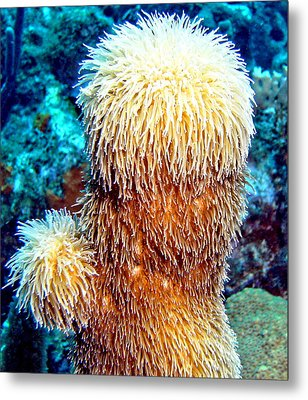 Metal Print featuring the photograph Corky Sea Finger Coral - The Muppet Of The Deep by Amy McDaniel