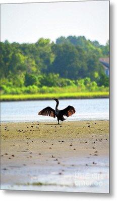 Cormorant At Topsail Beach Metal Print by Eva Kaufman