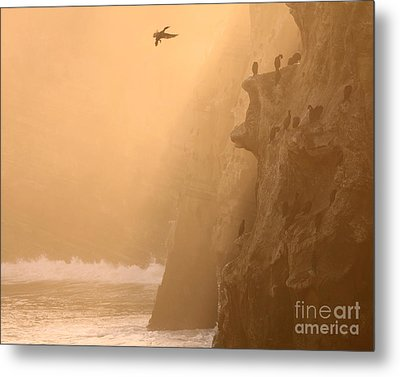 Cormorant Rookery In Dawn Fog Metal Print by Max Allen