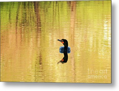 Cormorant With Reflections Metal Print by Charline Xia