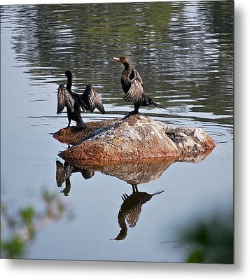 Cormorants Enjoying Warm Sun Metal Print