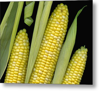 Corn On The Cob I  Metal Print