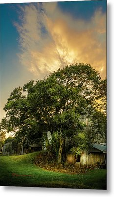 Metal Print featuring the photograph Corner Oak by Marvin Spates