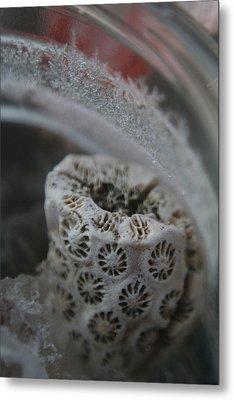 Cornered Coral Metal Print